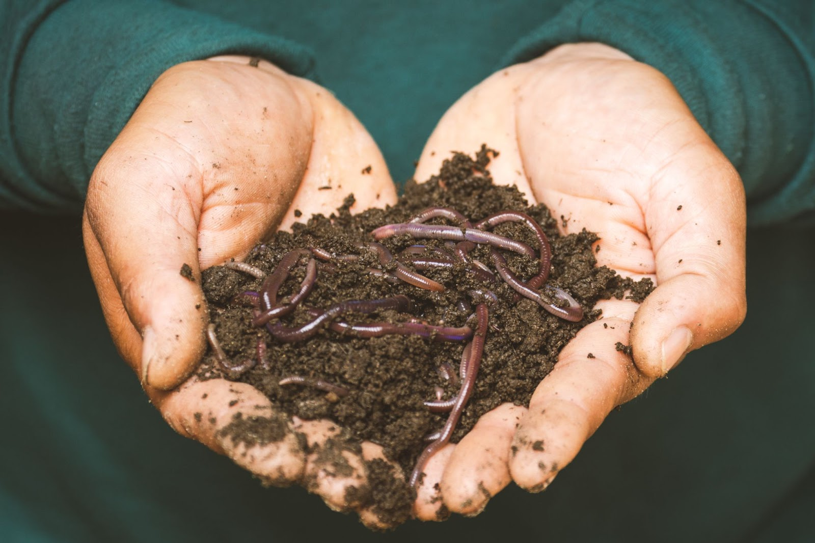 worms and soil on a man's hand