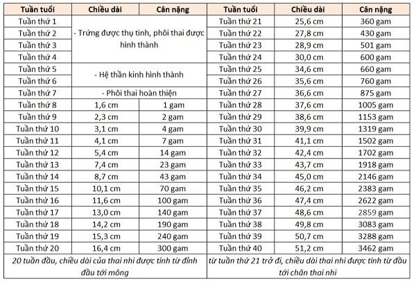 Bảng cân nặng thai nhi theo tuần (Nguồn: WHO)