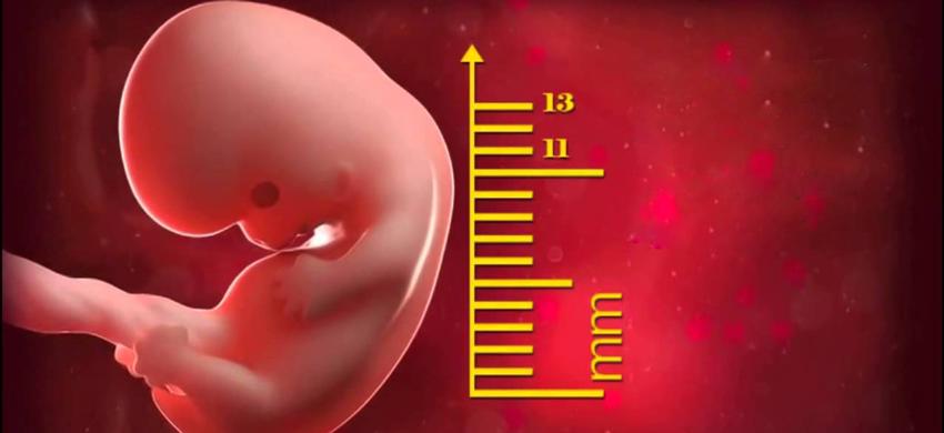 Khi mẹ mang thai 8 tuần, có nghĩa mẹ đã mang thai được 2 tháng.