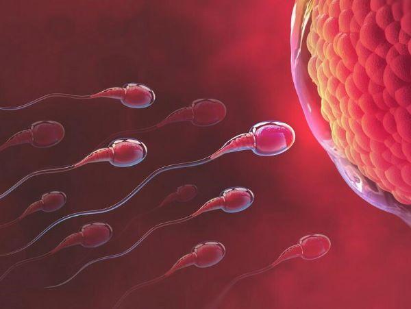 Sau 24h kể từ khi rụng trứng, nếu xảy ra thụ tinh thì sẽ tạo ra một hợp tử.