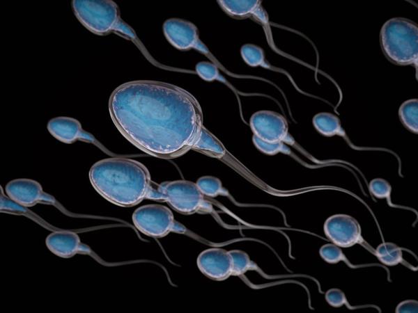 Tinh trùng là tế bào sinh dục được sản sinh từ tinh hoàn của nam giới