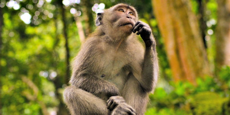 monkey in bali indonesia