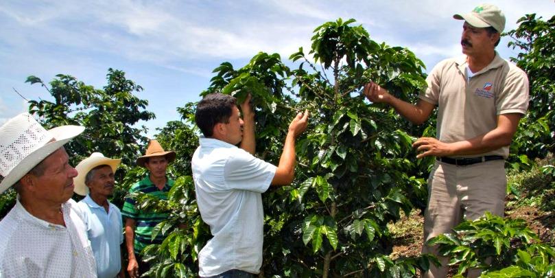 honduran coffee farmer giving a tour
