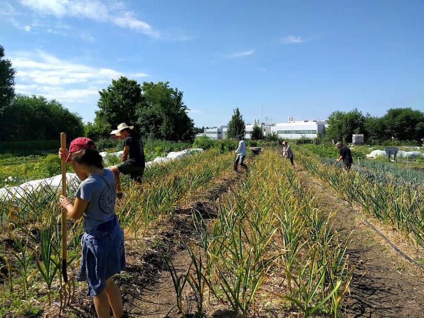 Trent Vegetable Gardens: Feeding Peterborough Campus