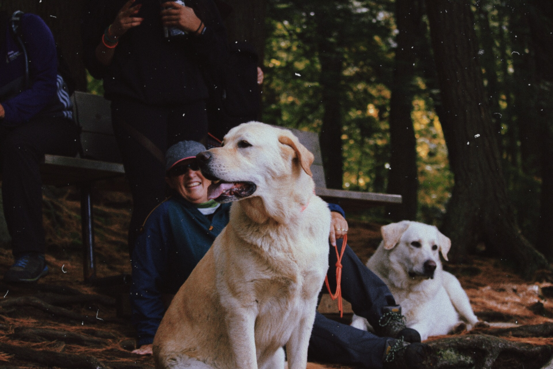 Trent Outdoors Makes Furry Friends on Algonquin Hiking Trip