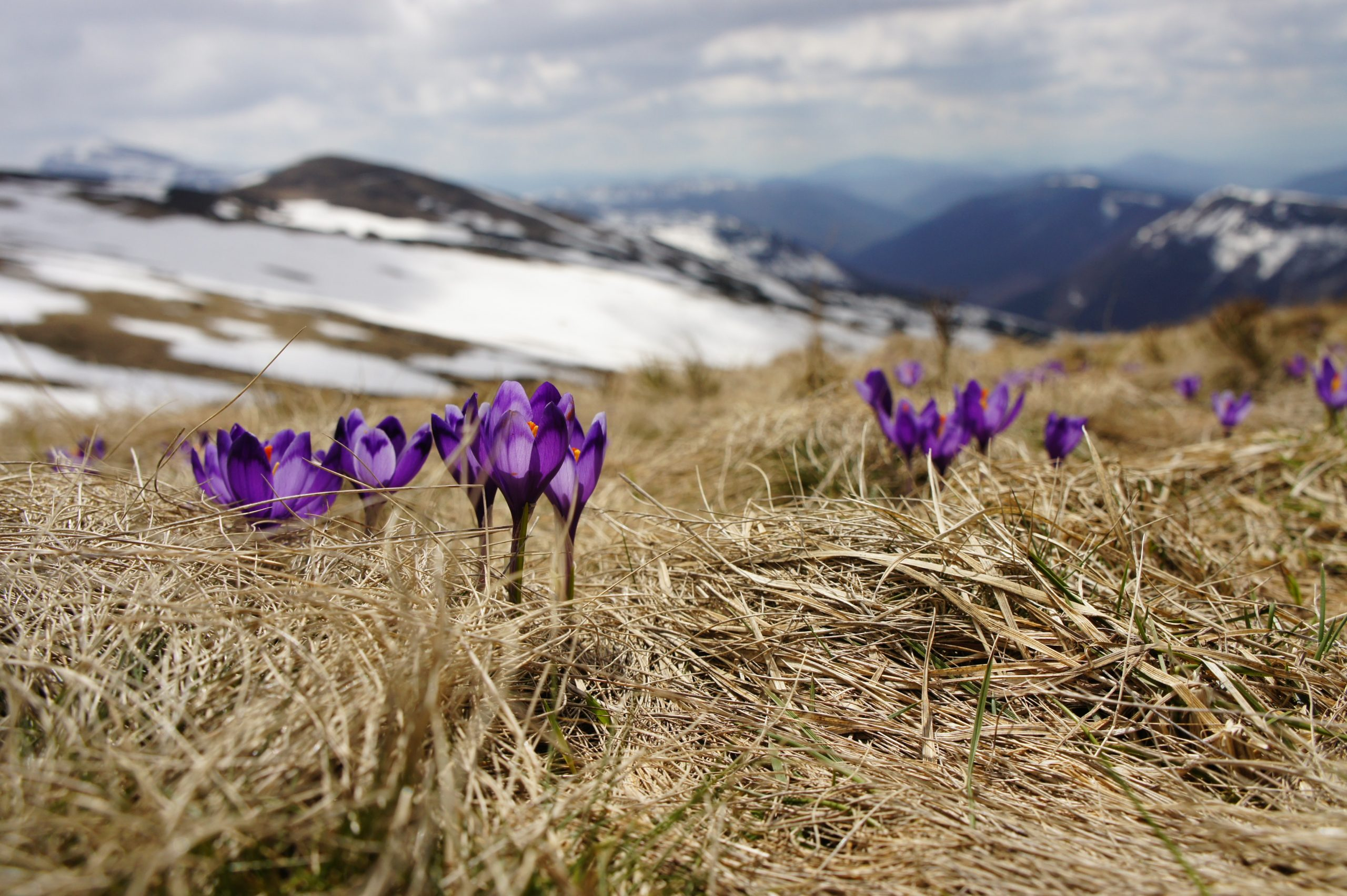 Welcoming Spring During Self-Isolation