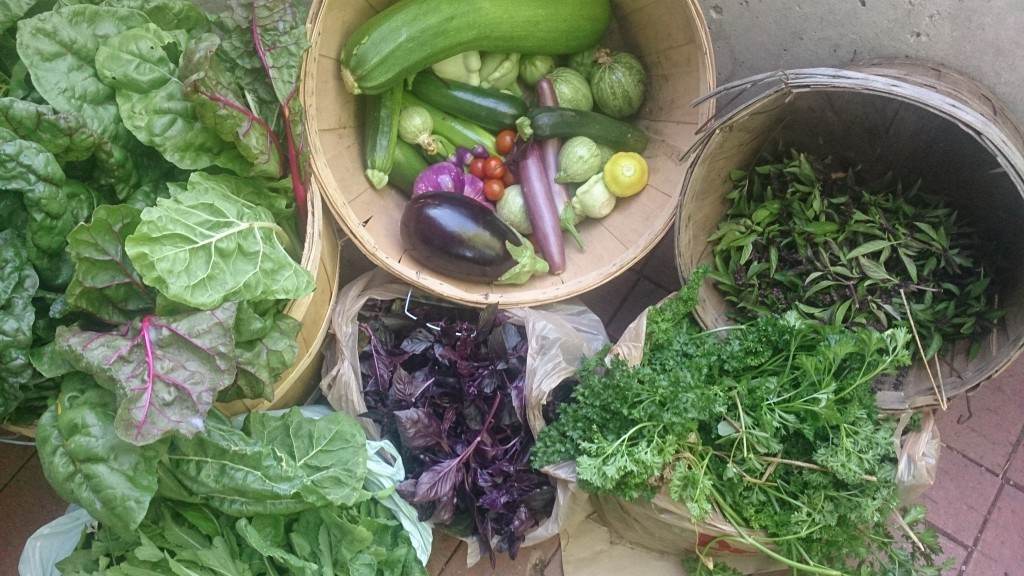 colourful harvest