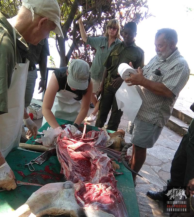 Animal autopsy by Rangers