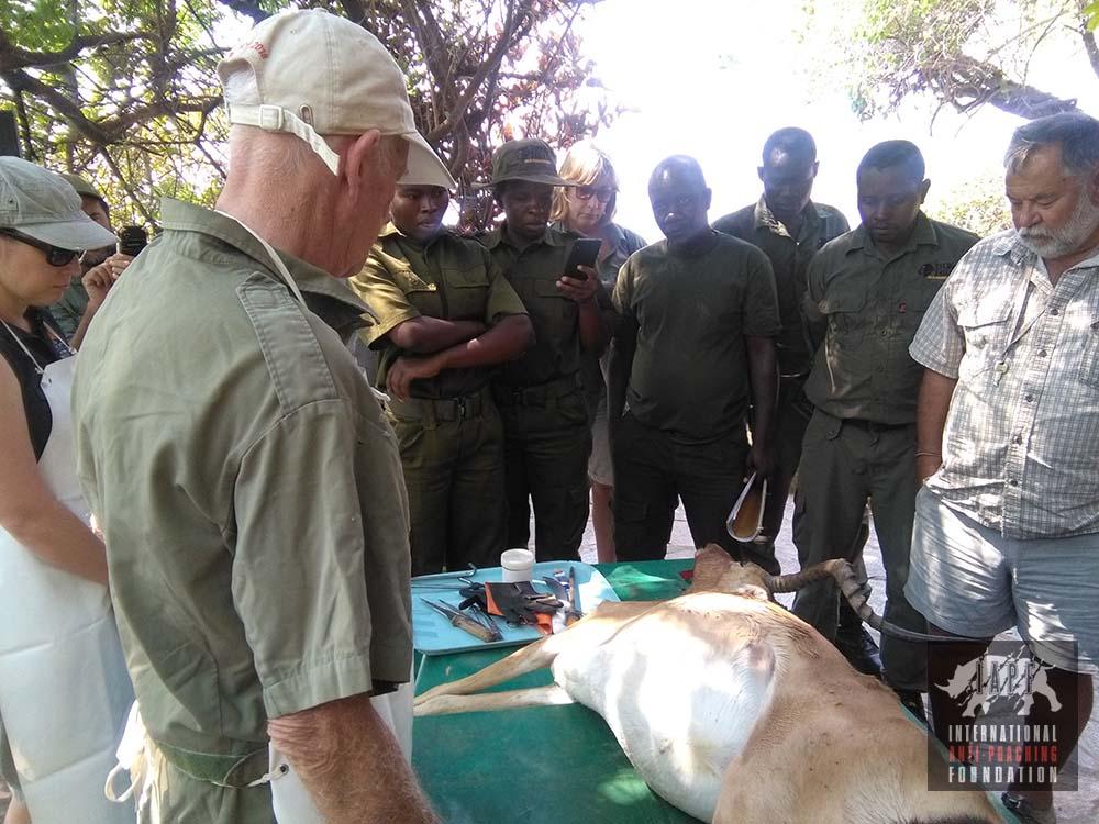 Rangers learning animal skills