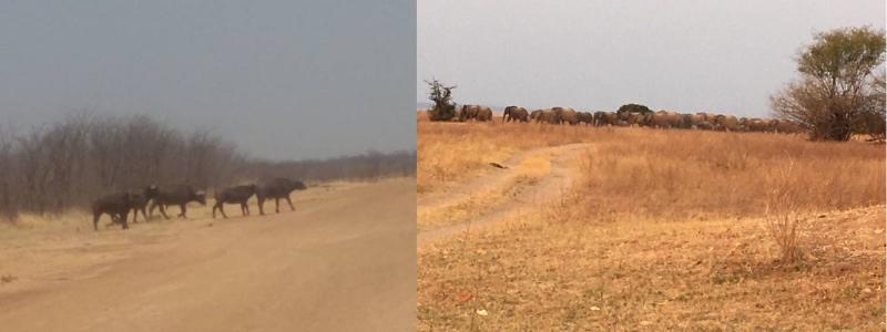 Wildlife returning