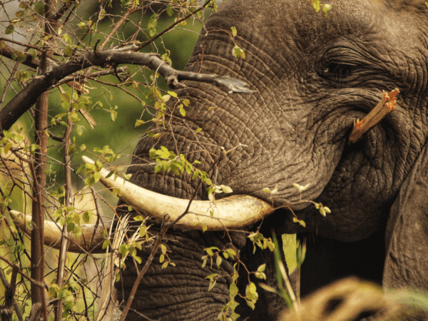 Not a single elephant has been lost, that's a significant impact.