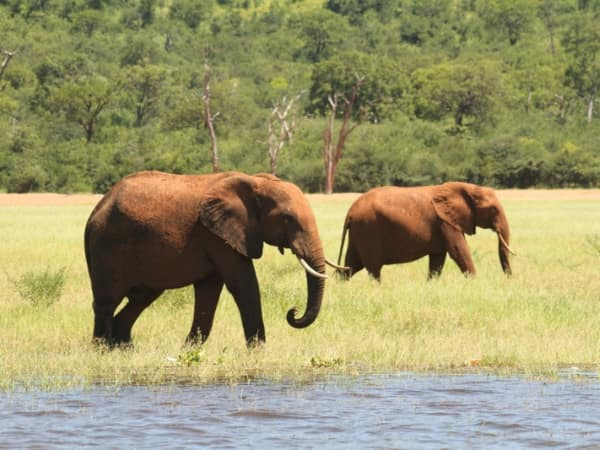 Q1 Impact Report - We've seized more elephant tusks than ever before.