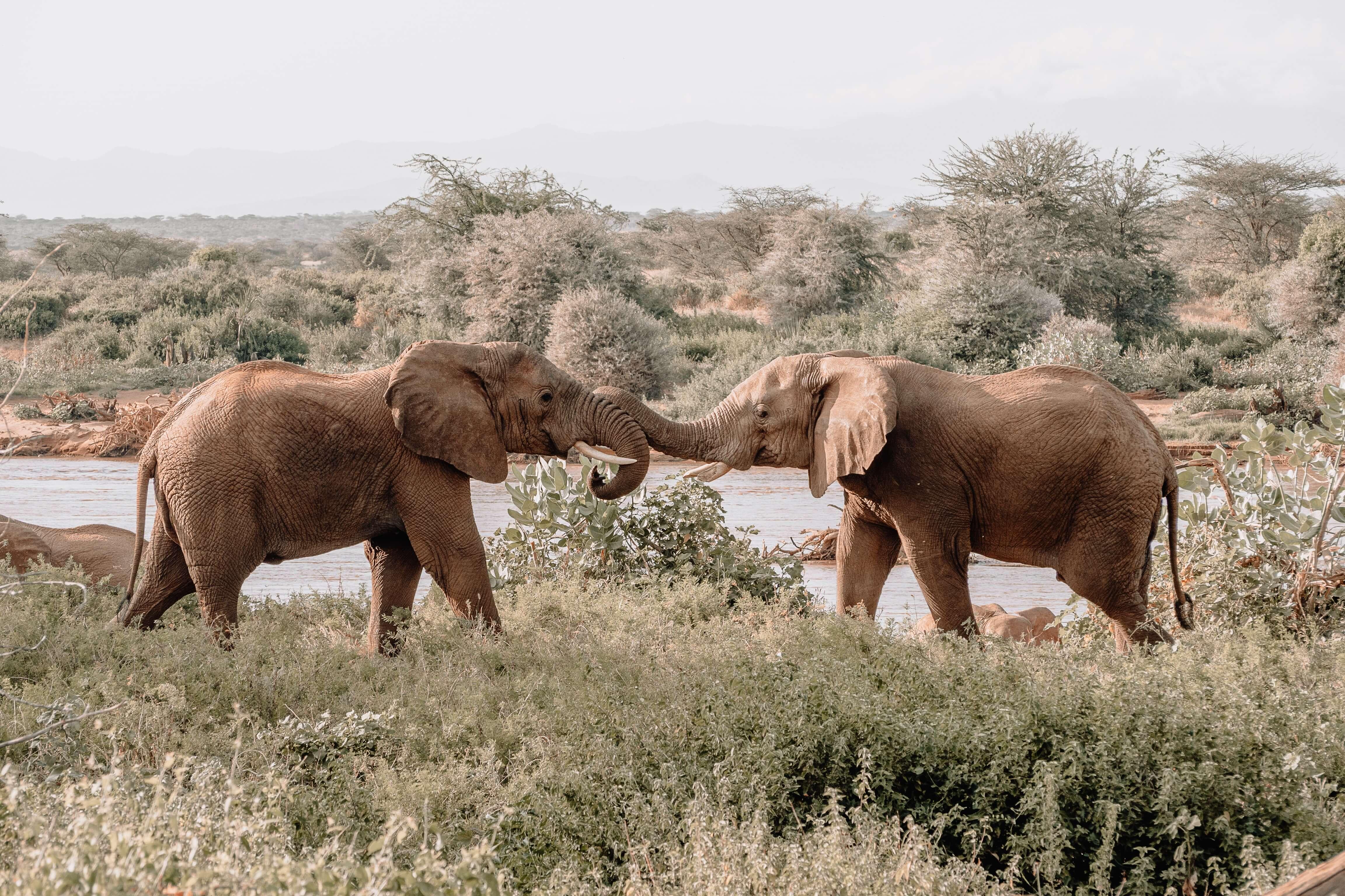 Guardians - Elephants
