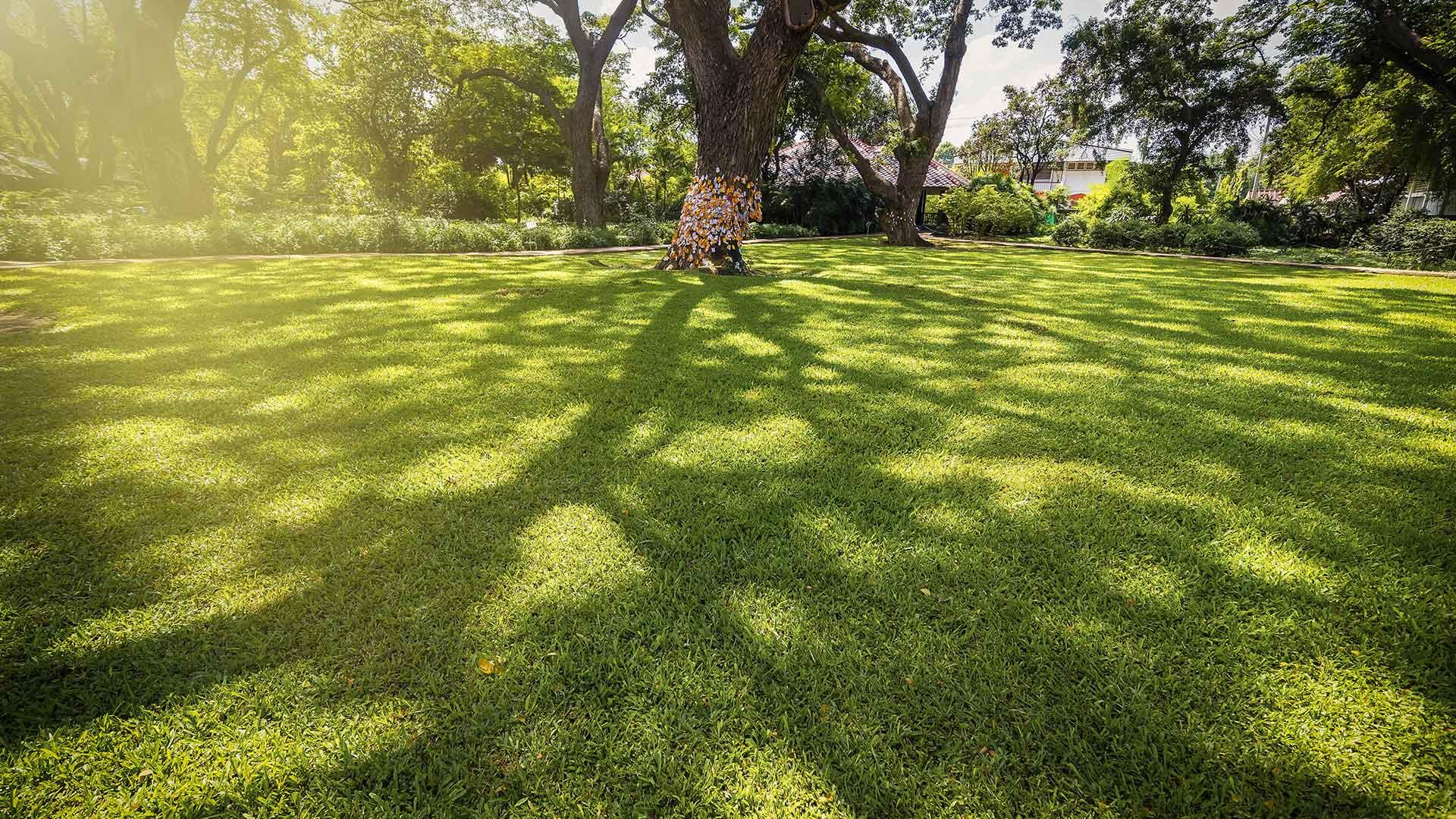 schattiger Garten mit Rollrasen unter Baum