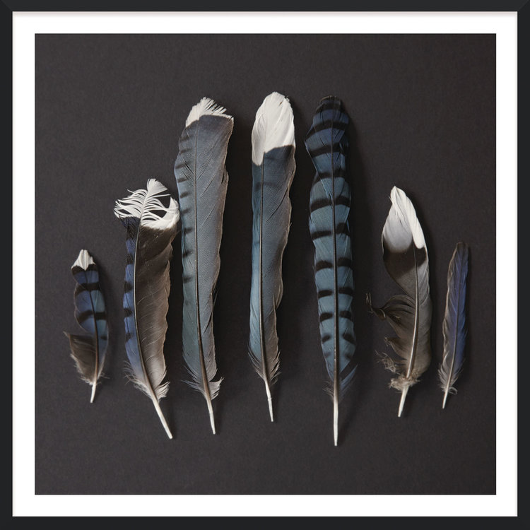 Black Silk Feathers
