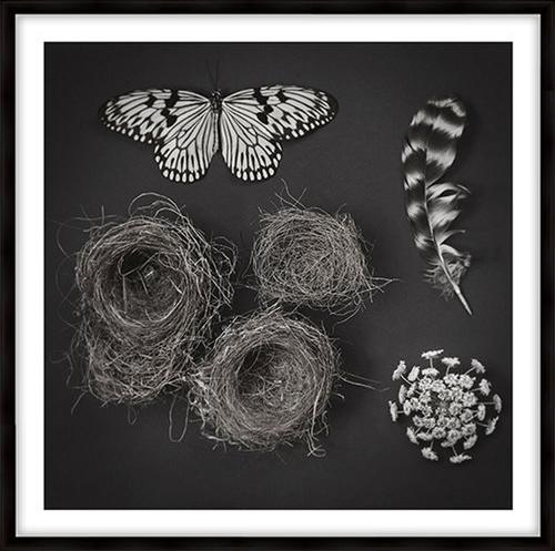 Deyrolle's Nests