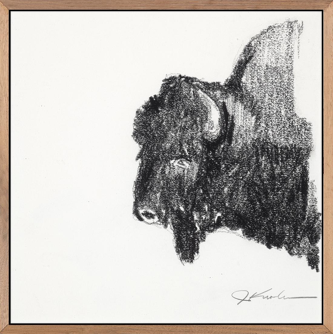 Bison Sketch 2