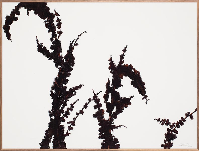 Black Vines 1
