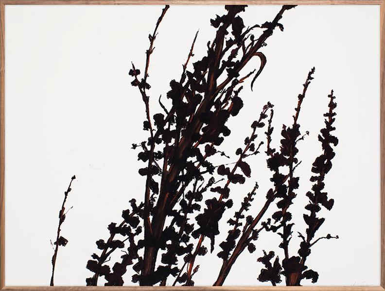Black Vines 4