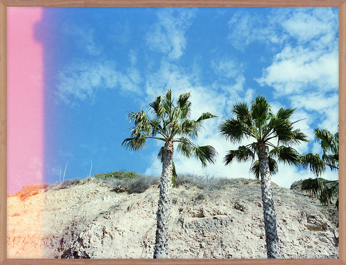 Secret Palms