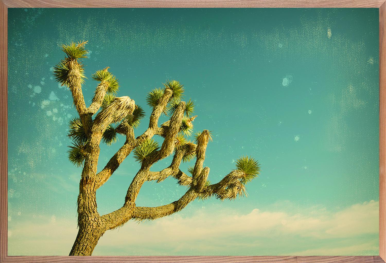 Antique Yucca 1