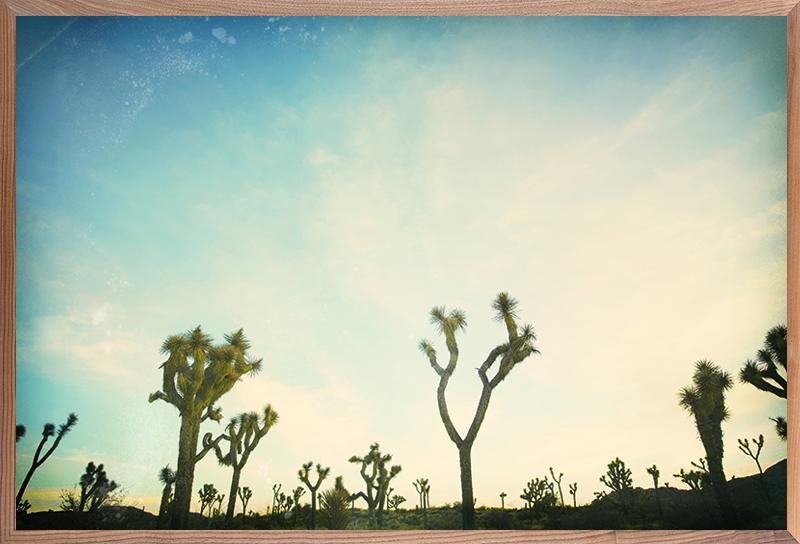 Antique Yucca 7