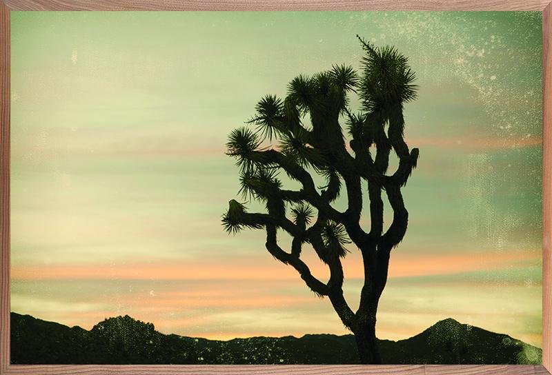 Antique Yucca Sunset