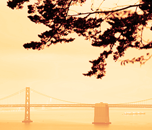 silhouette of tree near the golden gate bridge in San Francisco during heavy wildfires.