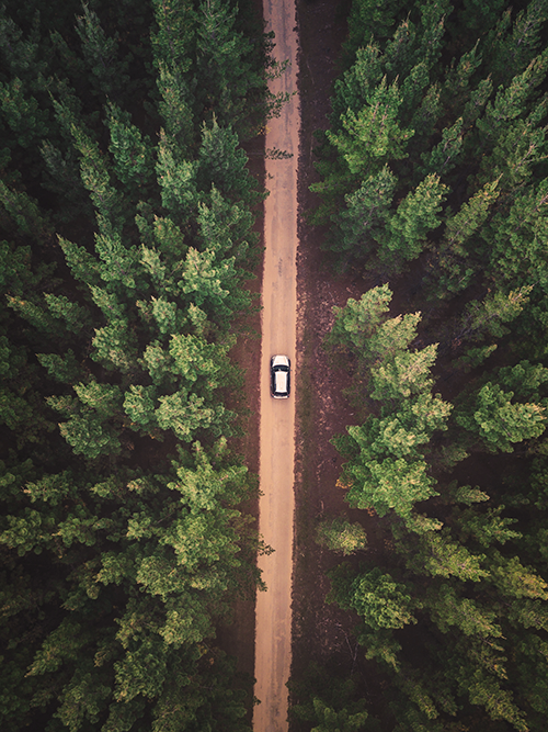 solo car driving on a dirt road in the middle of a dense forest