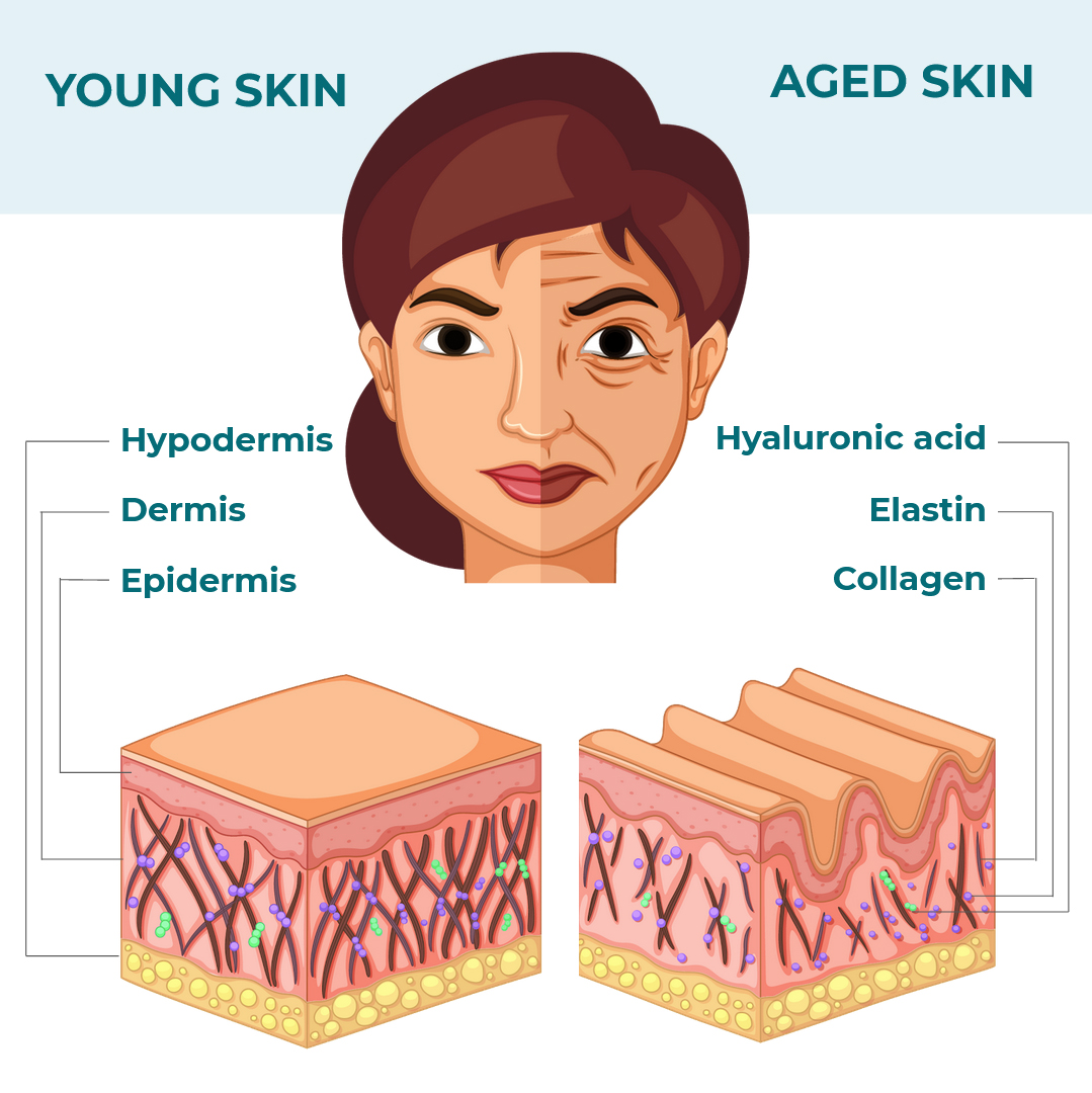 young skin vs aged skin