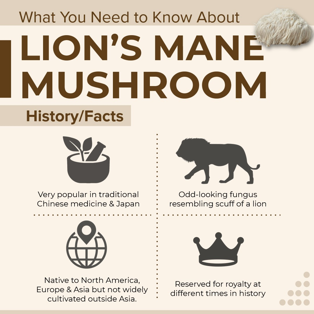 what you need to know about Lion's Mane