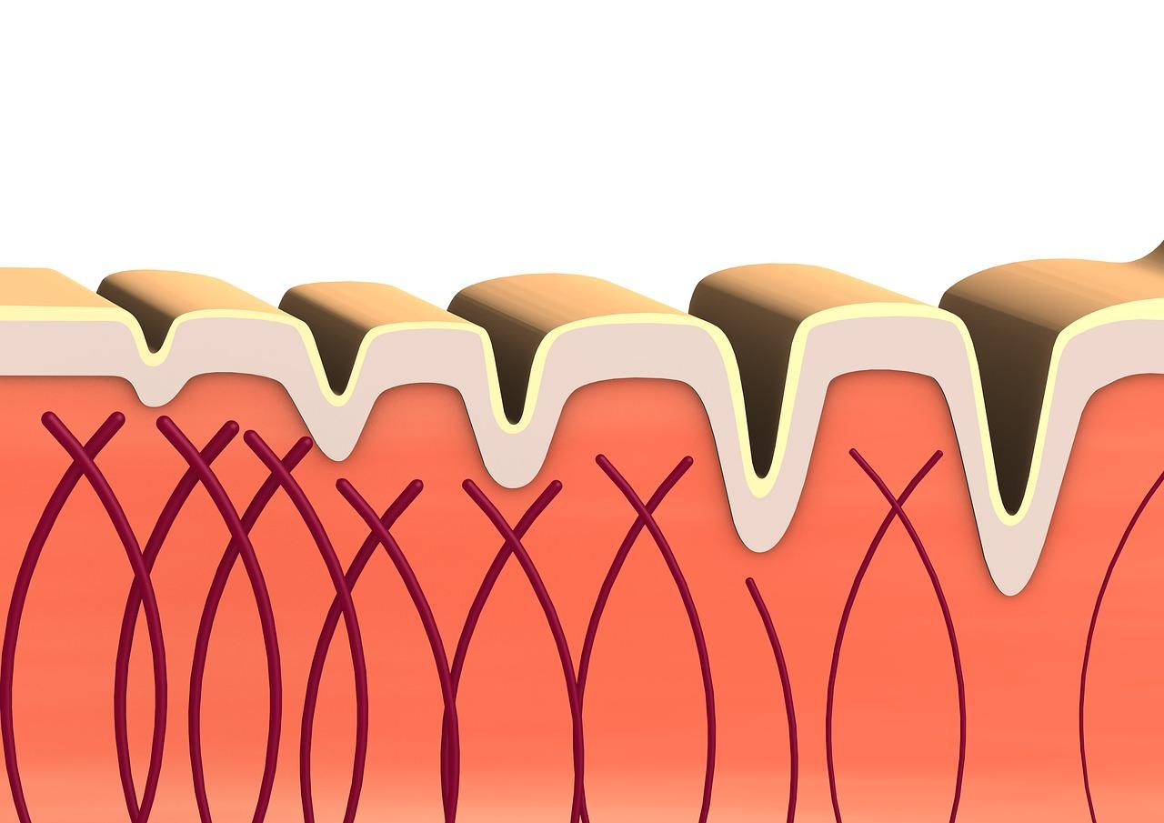 A cartoon depiction of collagen.
