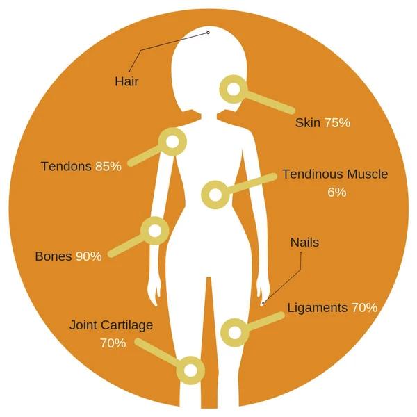 Collagen found in the body