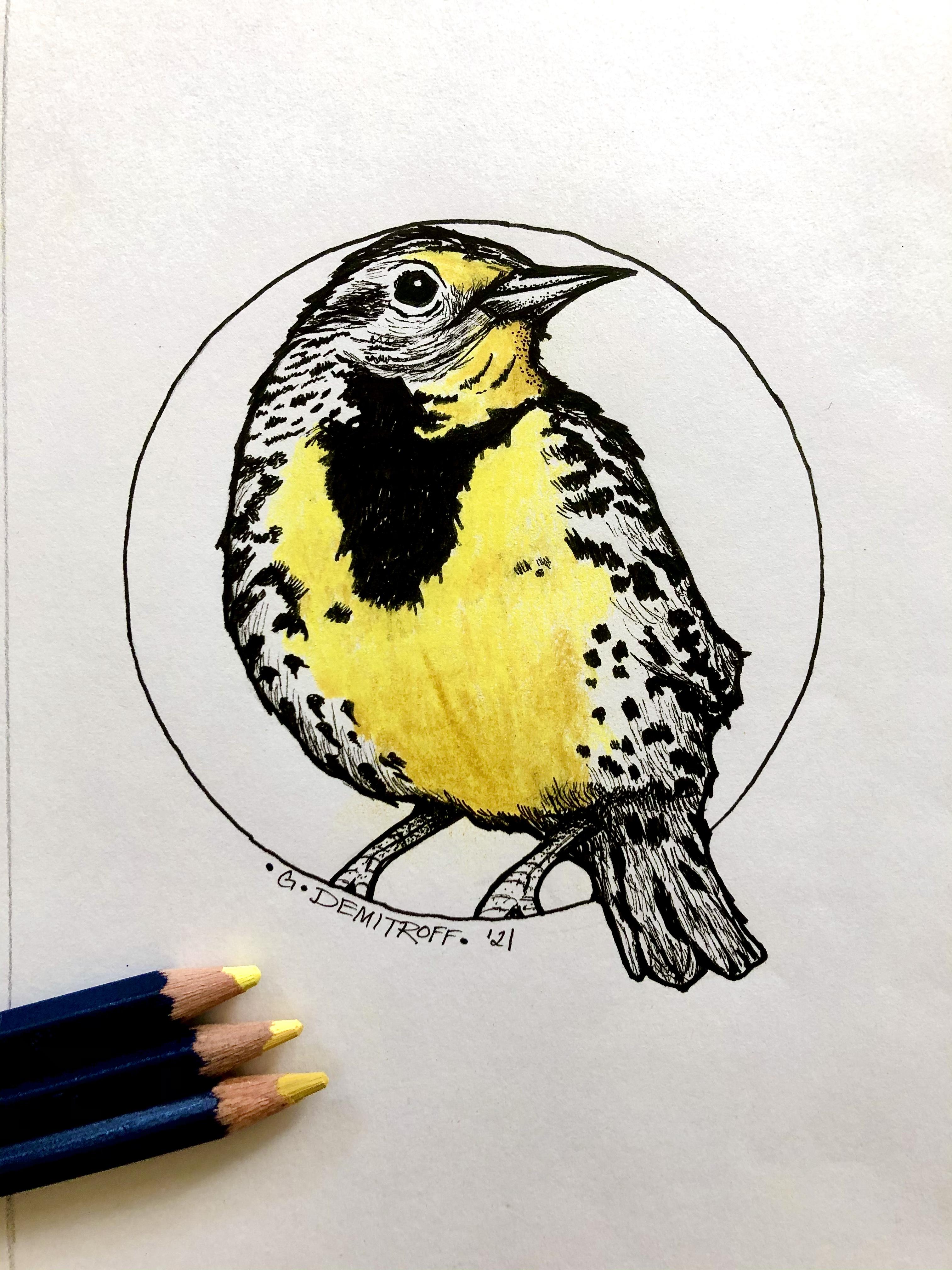 Western Meadowlark bird print