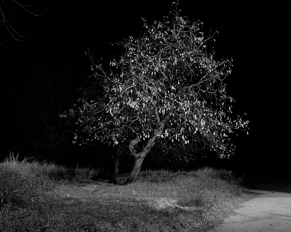 Photograph of a lone tree