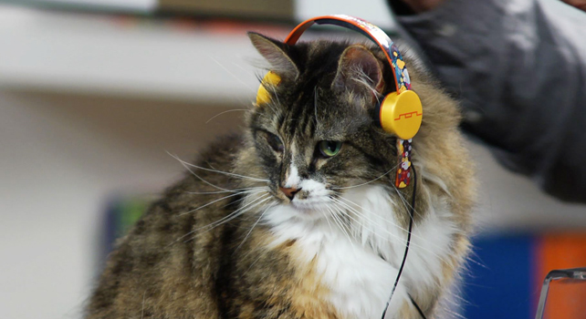 Headphones For Cats: Just One Idea From Spur, A New One-Stop Viral Vid