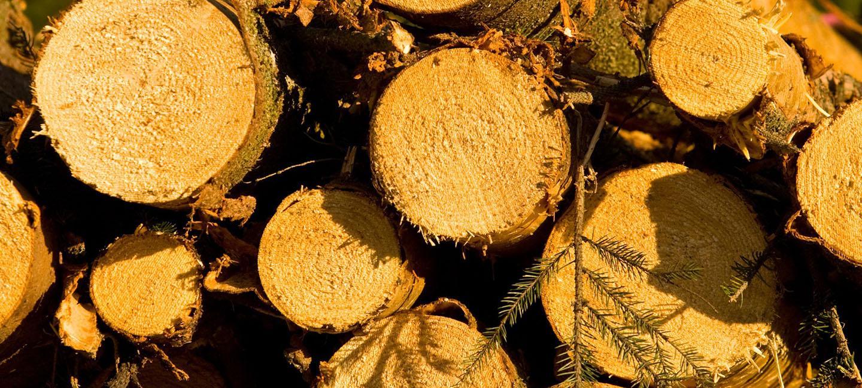 Suomalainen metsäteollisuus tuntee käyttämänsä puun alkuperän
