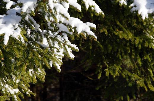 Sekä avohakkuilla että jatkuvalla kasvatuksella on metsissä paikkansa