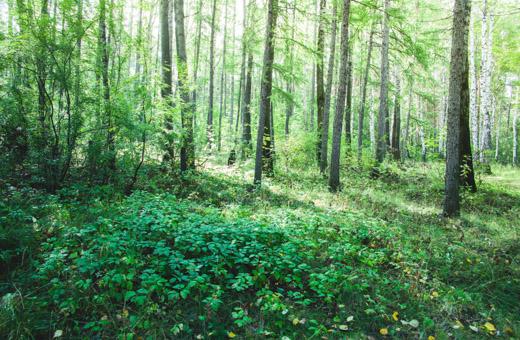 Metsäteollisuus käynnistää lehtojen hoidon toimintaohjelman