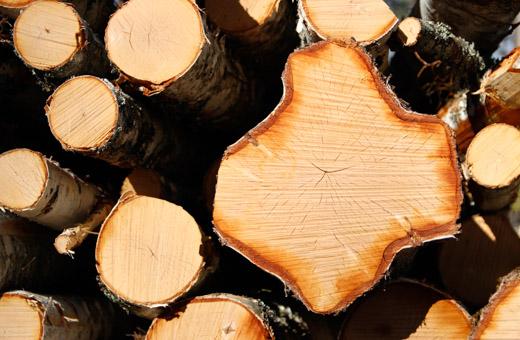 Puukauppa käy tasaisena − avoin puukauppapaikka Kuutio kattavasti käyttöön
