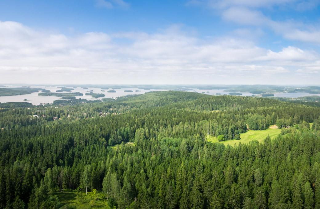 Metsäteollisuus jatkaa pitkäjänteistä vastuullisuustyötään: vastuullisuussitoumusten väliraportti kuvaa myönteistä kehitystä