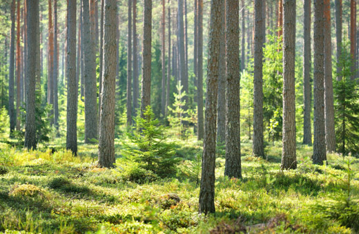 The EU forest strategy took steps in the right direction