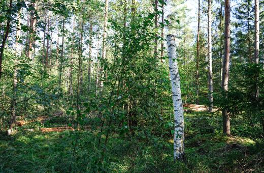 Talousmetsiin luodaan luonnonmetsille tyypillisiä rakennepiirteitä, jotka hyödyttävät monia metsälajeja. Esimerkiksi tekopökkelöitä tekemällä turvataan lahopuista riippuvaisten lajien tarpeita.