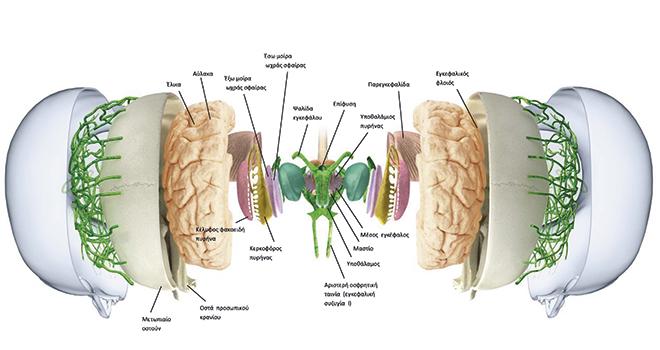 Σύγχρονες Μέθοδοι Απεικόνισης Εγκεφάλου στον Προεγχειρητικό Έλεγχο