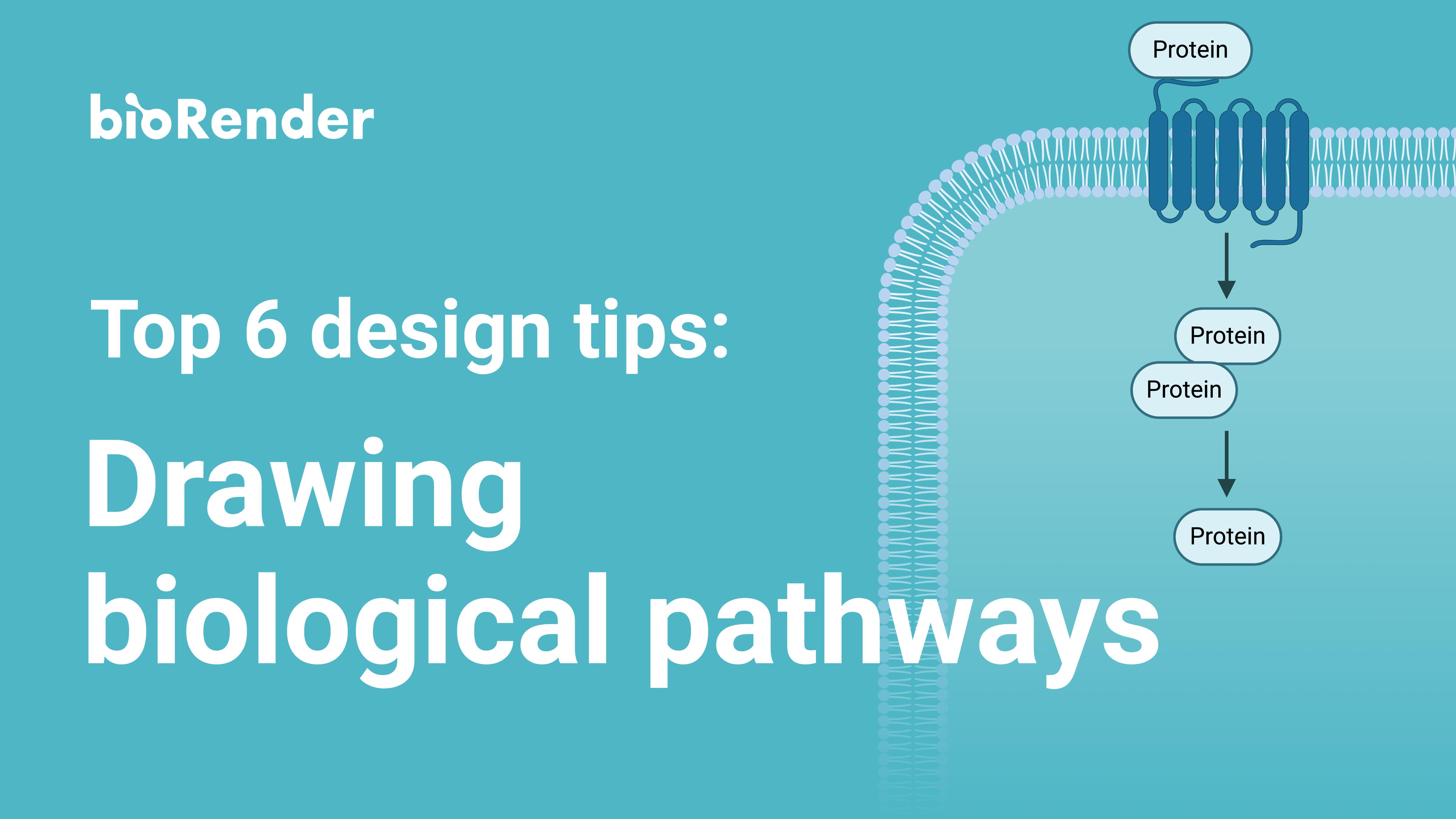Tips for Illustrating Biological Pathways