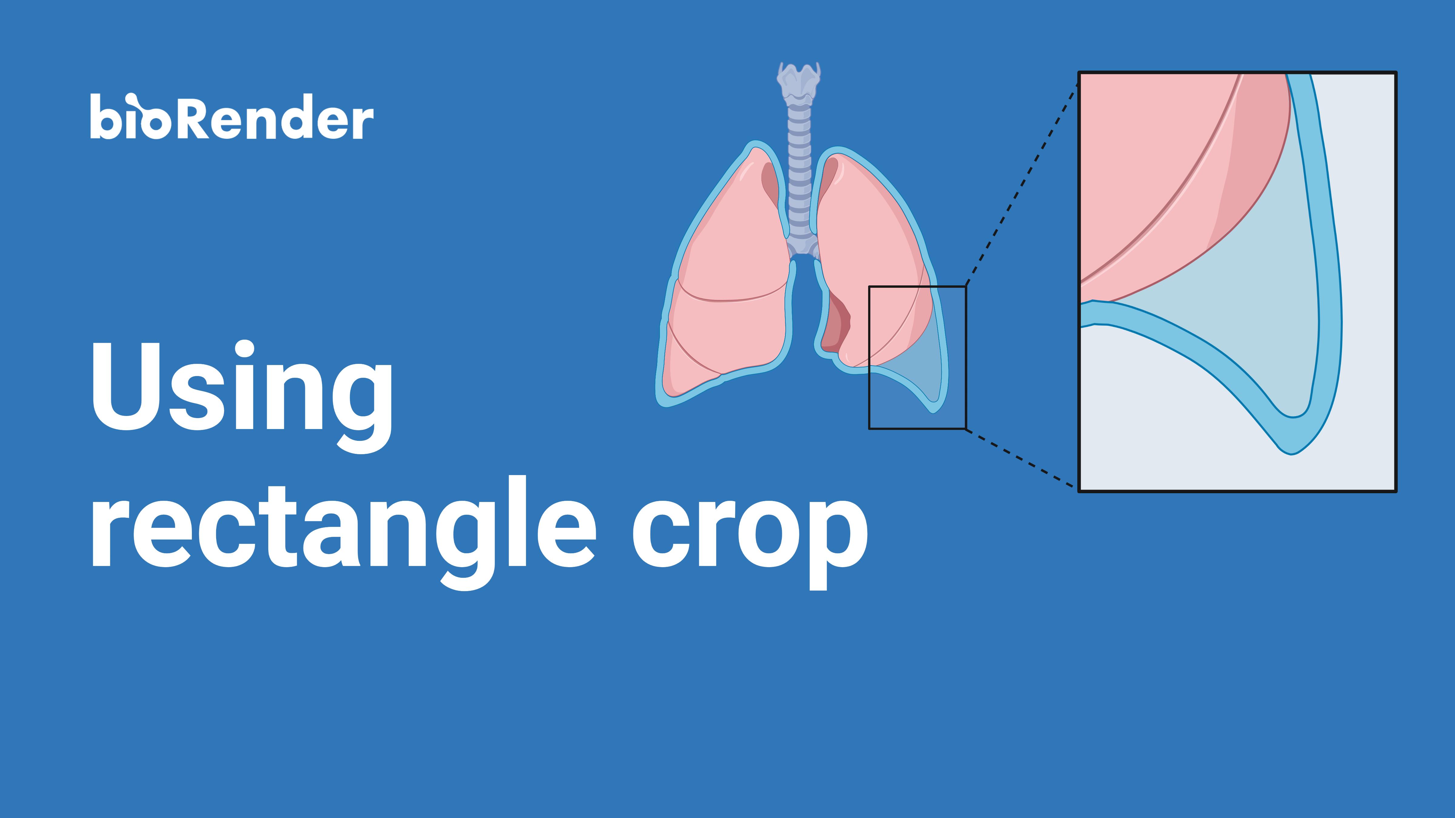 Using rectangle crop