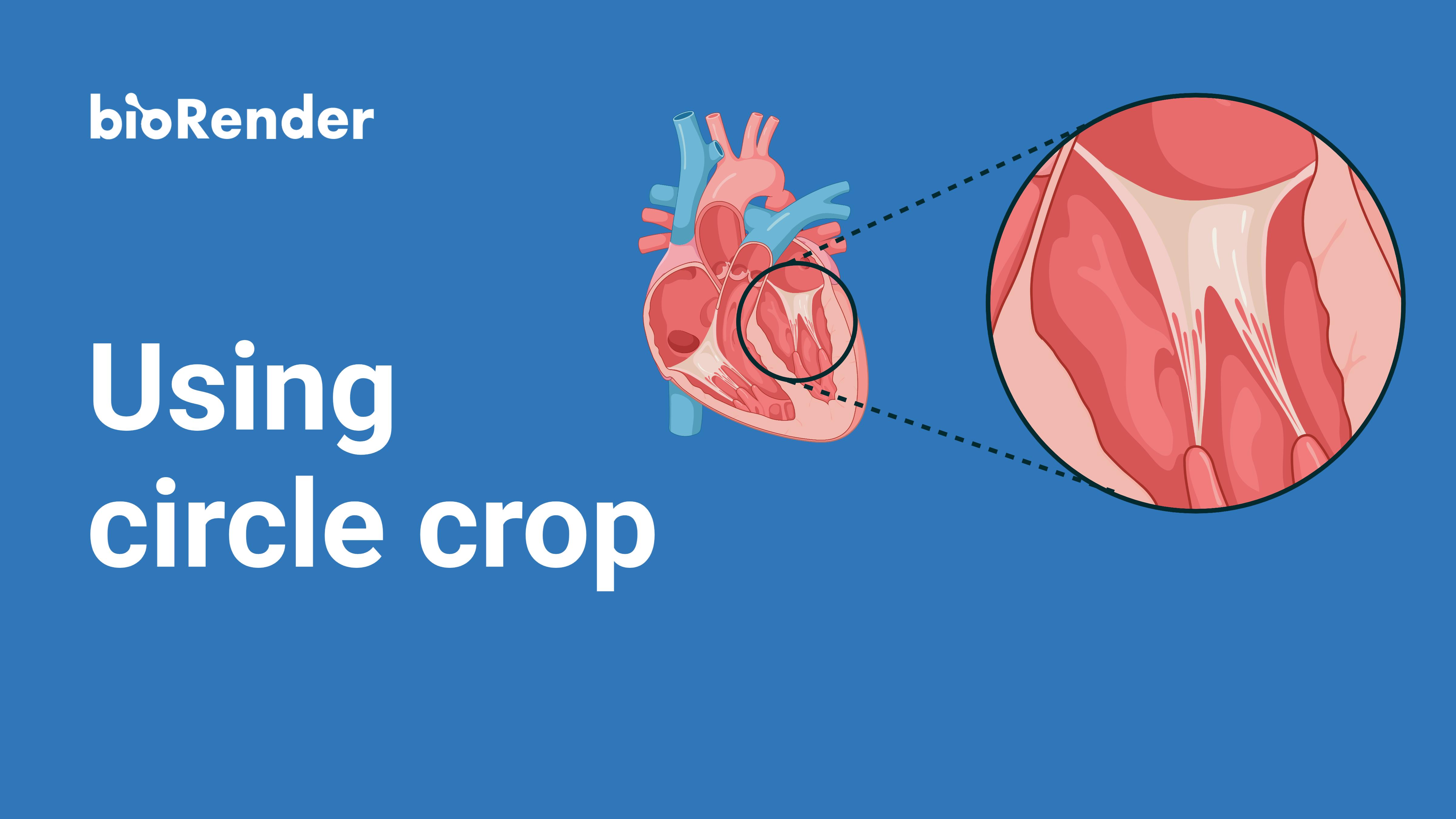 Using circle crop