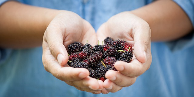 mulberry benefits for skin