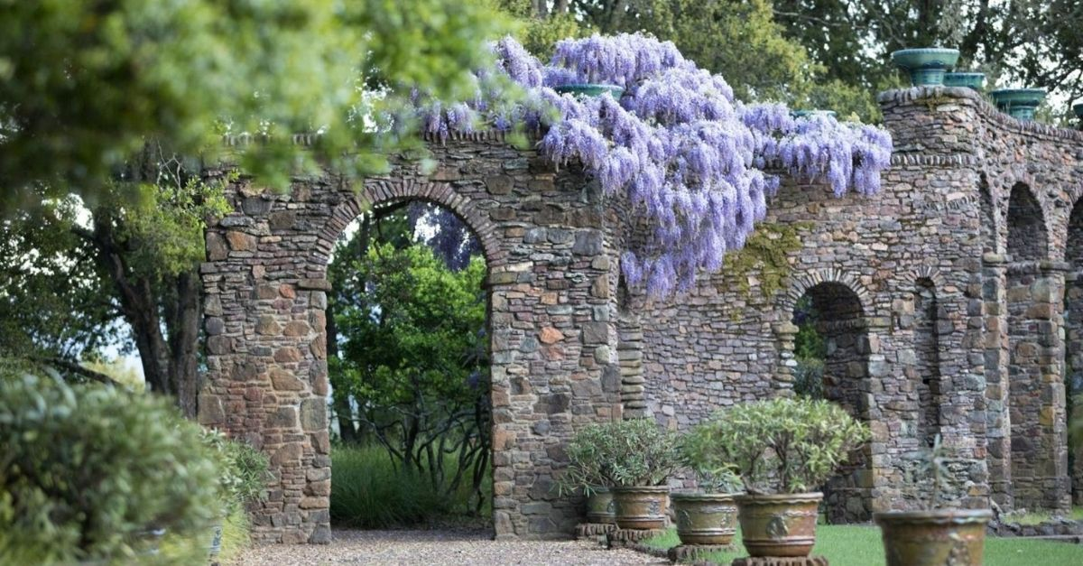 Stone wall with purple hanging wisteria flowers
