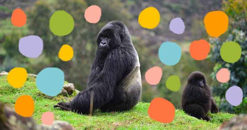 Gorilla sitting on green grass, with illustrated polka dots around it